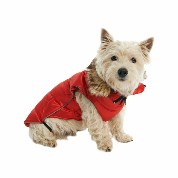 BUSTER Active Winter Dog Coat High Risk Red Medium/Large 2