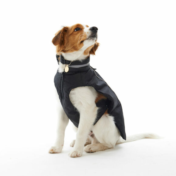BUSTER Classic Softshell Dog Coat Blackberry XX-Large 2
